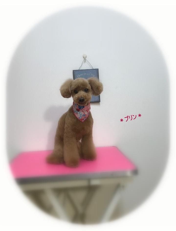 プリンちゃん&キャリーちゃん_a0315823_20200635.jpg
