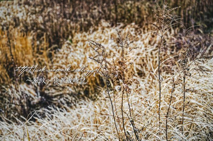 枯れ野に咲くドライフラワー。_f0235723_20220387.jpg