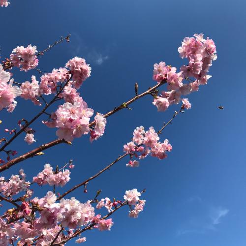 波乱の2月は「前奏曲」をたっぷり_e0103327_22481219.jpg