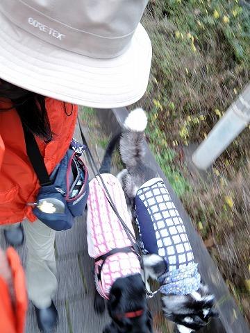 散歩屋日誌【35】_c0062832_15493944.jpg