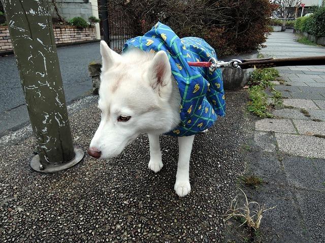 散歩屋日誌【35】_c0062832_15494032.jpg