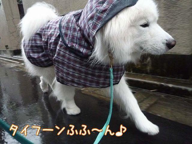 散歩屋日誌【35】_c0062832_16512014.jpg