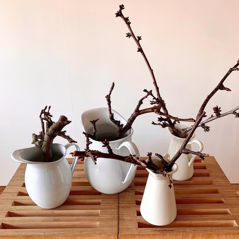 開花を待つ さくらんぼ&和梨の枝_e0243332_22310167.jpg