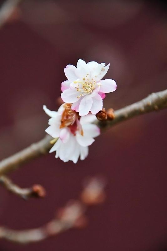 桜咲く_b0314043_09193700.jpg