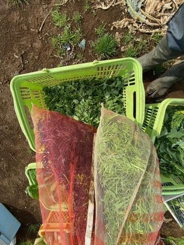 葱が特に美味しい・・・ジョイア畑_c0222448_12554228.jpg