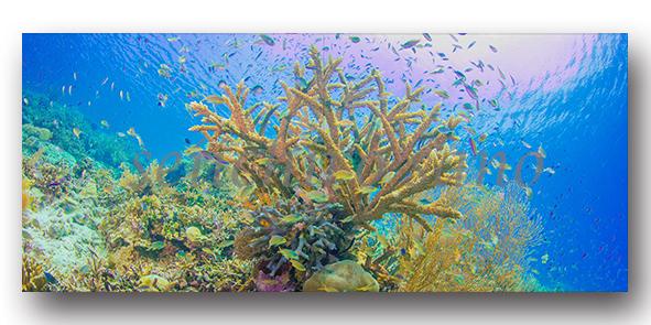 新刊写真集 佐野誠一郎「しあわせの 咲く 海へ」のご案内_c0142549_15464792.jpg