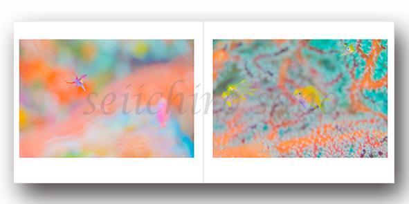新刊写真集 佐野誠一郎「しあわせの 咲く 海へ」のご案内_c0142549_15465653.jpg
