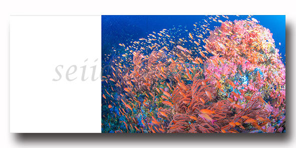 新刊写真集 佐野誠一郎「しあわせの 咲く 海へ」のご案内_c0142549_15471827.jpg