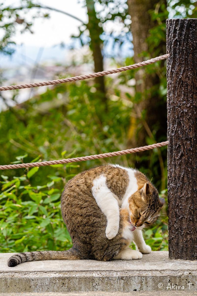 〜岩合光昭に挑戦〜 京都ネコ歩き -22-_f0152550_17095152.jpg