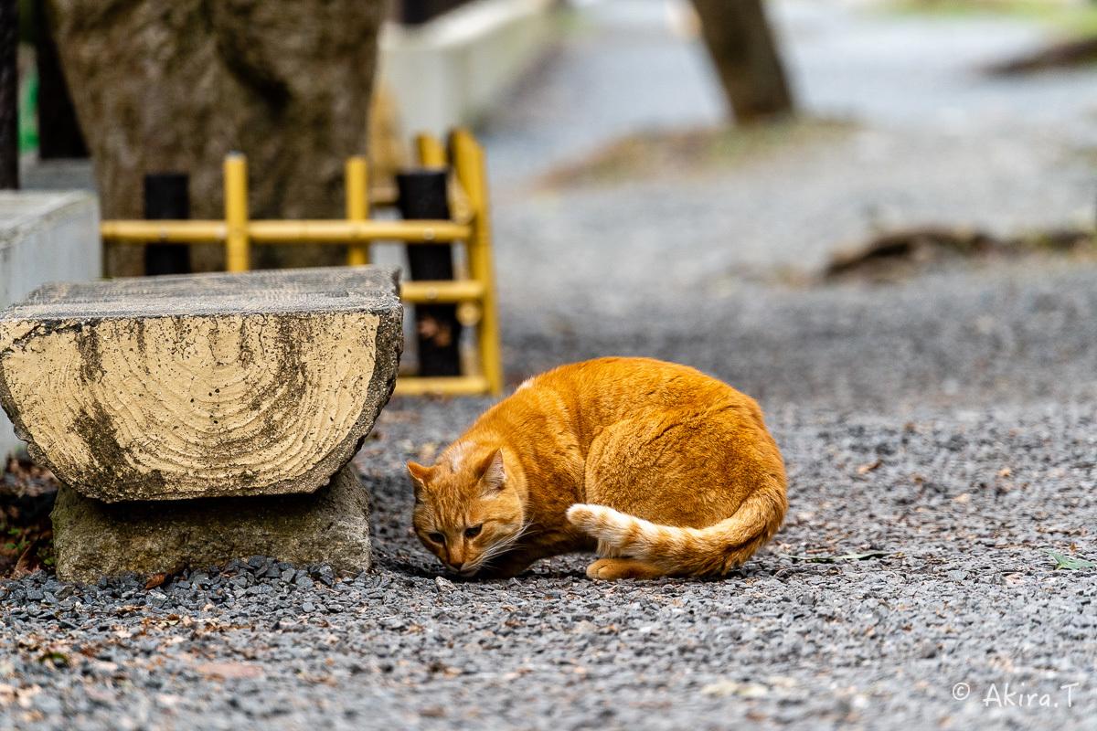 〜岩合光昭に挑戦〜 京都ネコ歩き -22-_f0152550_17105960.jpg