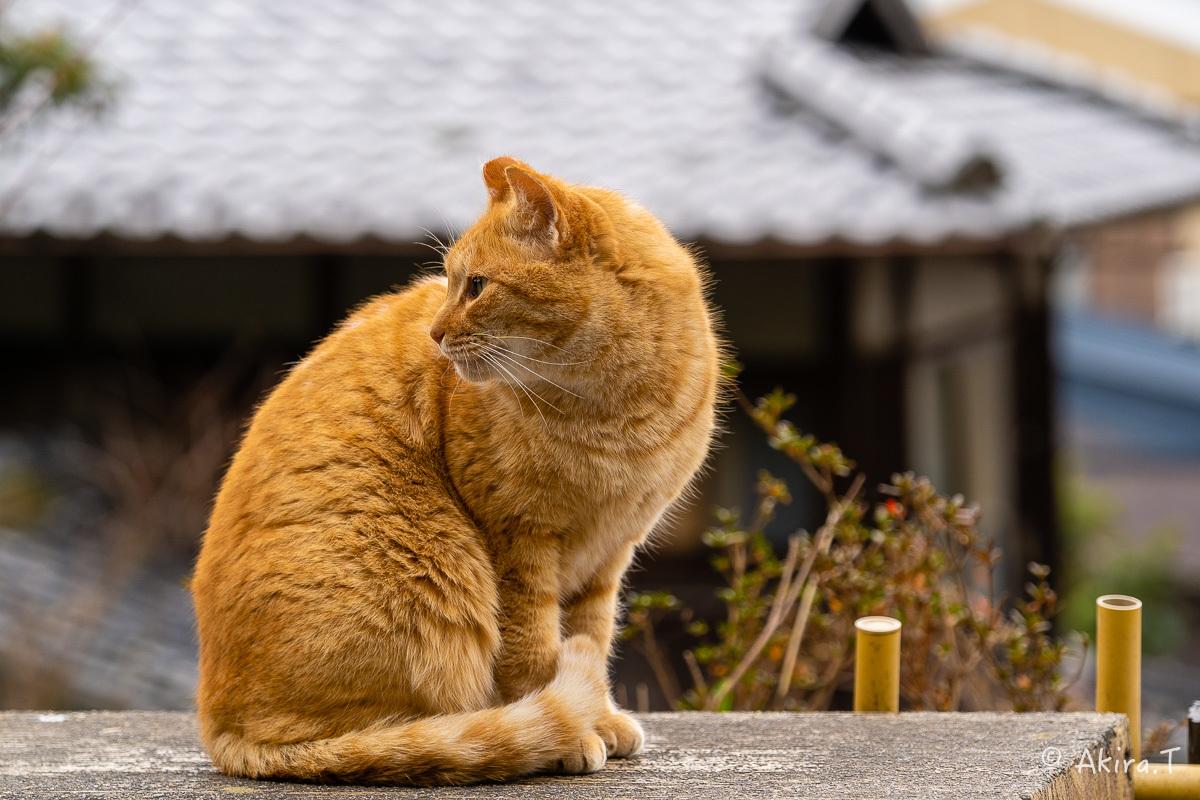 〜岩合光昭に挑戦〜 京都ネコ歩き -22-_f0152550_17142489.jpg