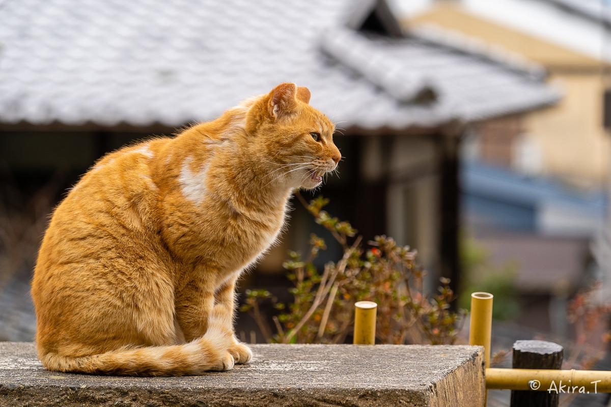 〜岩合光昭に挑戦〜 京都ネコ歩き -22-_f0152550_17143136.jpg