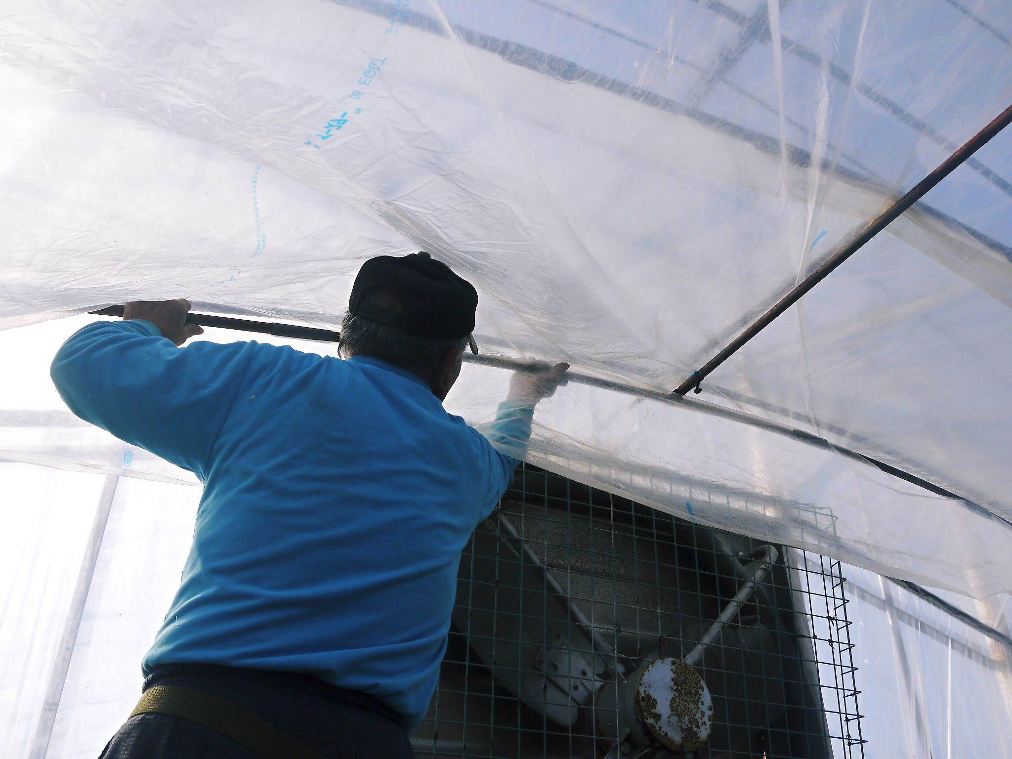 熊本ぶどう 社方園 ハウスの内張り作業を熊本農業高校からの農業実習と共に行っています(2020)後編_a0254656_15392683.jpg