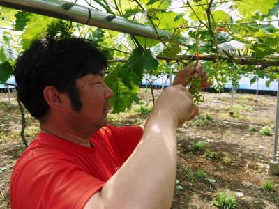 熊本ぶどう 社方園 ハウスの内張り作業を熊本農業高校からの農業実習と共に行っています(2020)後編_a0254656_16264706.jpg