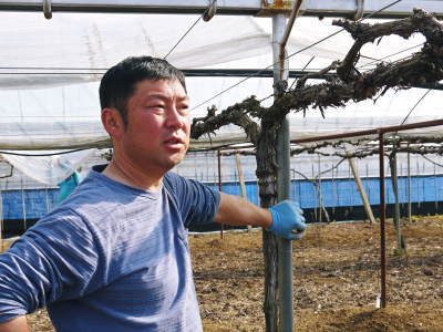 熊本ぶどう 社方園 ハウスの内張り作業を熊本農業高校からの農業実習と共に行っています(2020)後編_a0254656_16291885.jpg