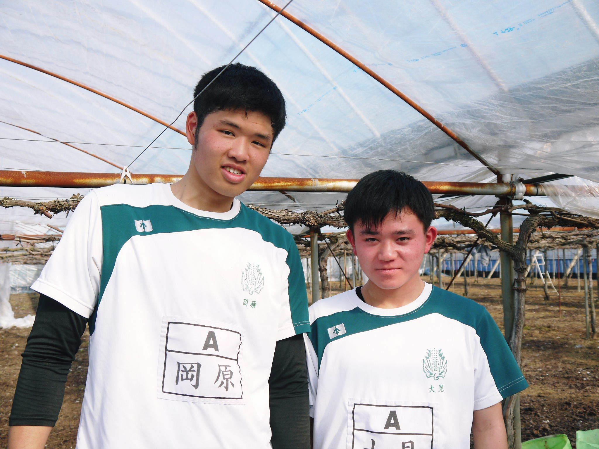 熊本ぶどう 社方園 ハウスの内張り作業を熊本農業高校からの農業実習と共に行っています(2020)後編_a0254656_16315076.jpg