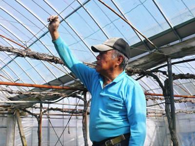 熊本ぶどう 社方園 ハウスの内張り作業を熊本農業高校からの農業実習と共に行っています(2020)後編_a0254656_16365345.jpg