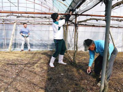 熊本ぶどう 社方園 ハウスの内張り作業を熊本農業高校からの農業実習と共に行っています(2020)後編_a0254656_16421382.jpg