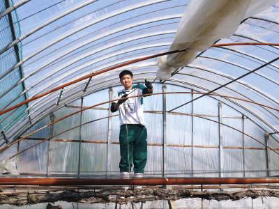 熊本ぶどう 社方園 ハウスの内張り作業を熊本農業高校からの農業実習と共に行っています(2020)後編_a0254656_16482843.jpg