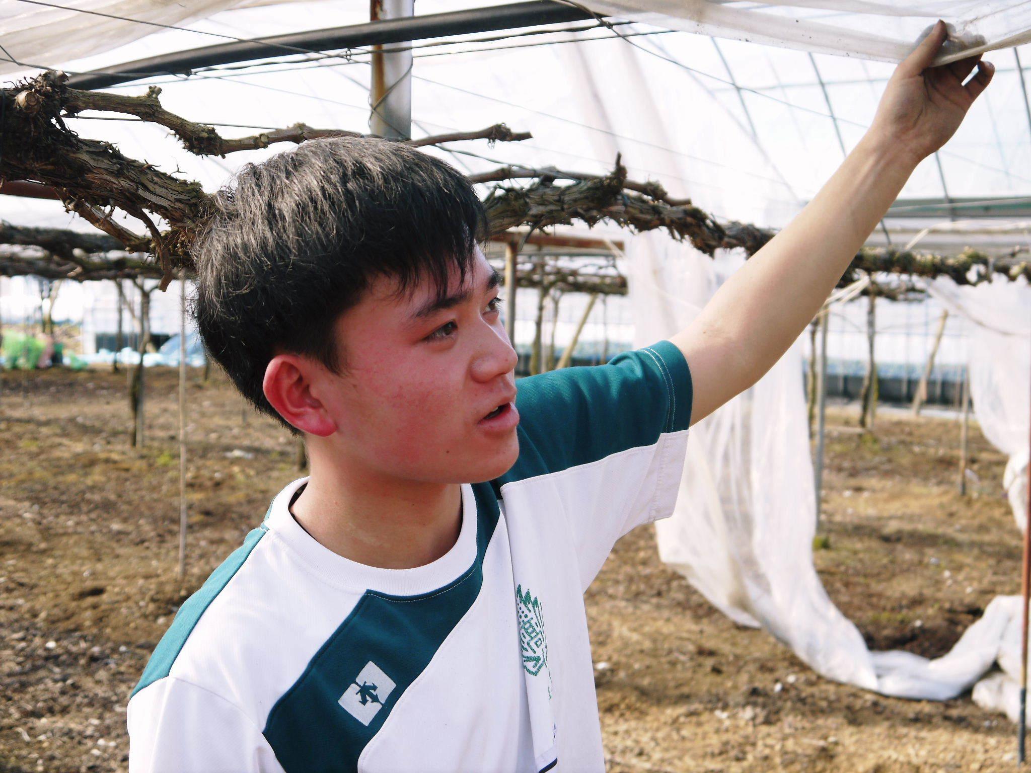 熊本ぶどう 社方園 ハウスの内張り作業を熊本農業高校からの農業実習と共に行っています(2020)後編_a0254656_16552198.jpg