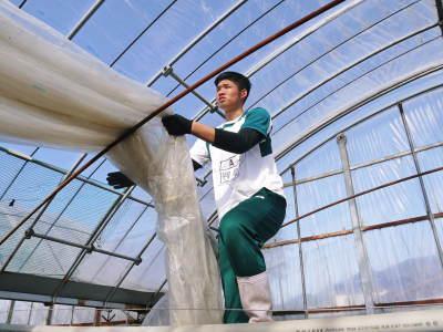 熊本ぶどう 社方園 ハウスの内張り作業を熊本農業高校からの農業実習と共に行っています(2020)後編_a0254656_17012445.jpg