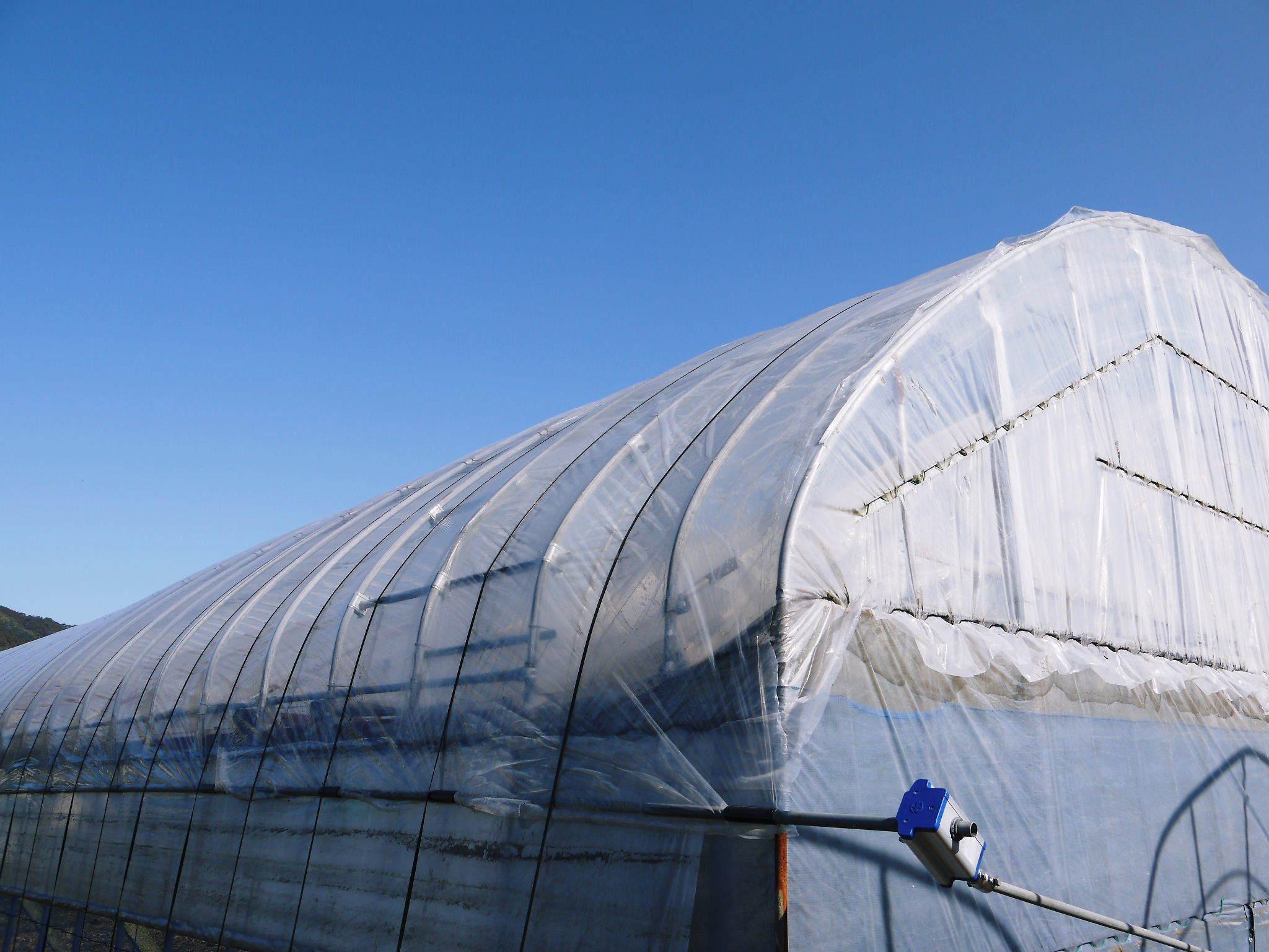 熊本ぶどう 社方園 ハウスの内張り作業を熊本農業高校からの農業実習と共に行っています(2020)後編_a0254656_17174365.jpg