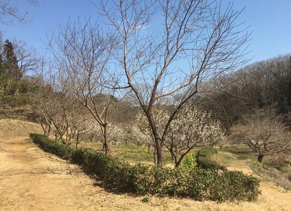 今日も春の陽気でちた!_c0110361_16020714.jpg