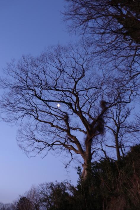 太田金山からの朝景(2) (2020/2/15撮影)_b0369971_13223601.jpg