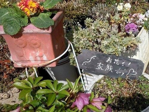 路傍の花、樹々の鳥(370) ~ 店先の春 ~_b0102572_11515622.jpg