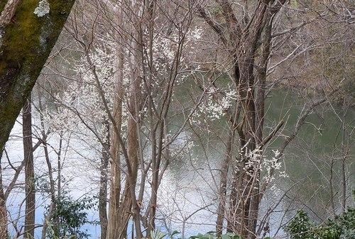 路傍の花、樹々の鳥(371) ~ 梅ストリートで ~_b0102572_12133167.jpg