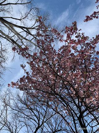 春一番が吹いた日。_f0071480_16344491.jpg
