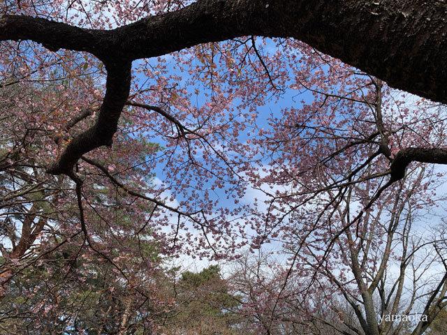春一番が吹いた日。_f0071480_16345225.jpg