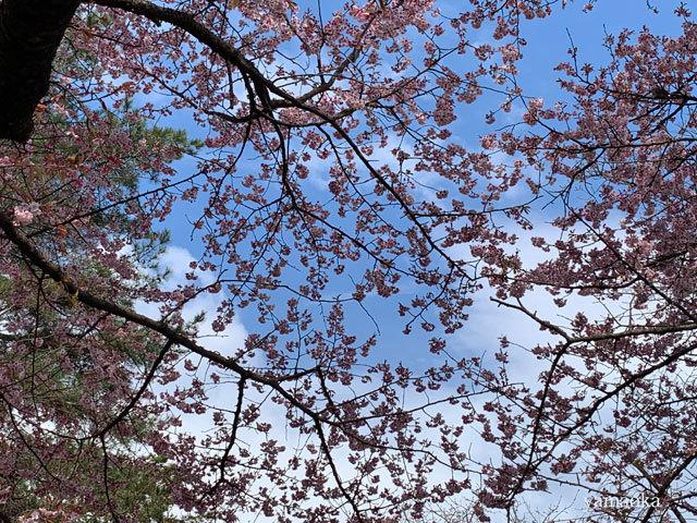 春一番が吹いた日。_f0071480_16350197.jpg