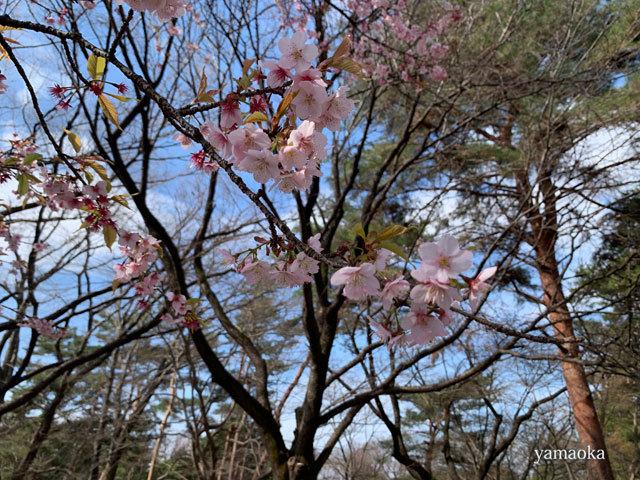 春一番が吹いた日。_f0071480_16350469.jpg