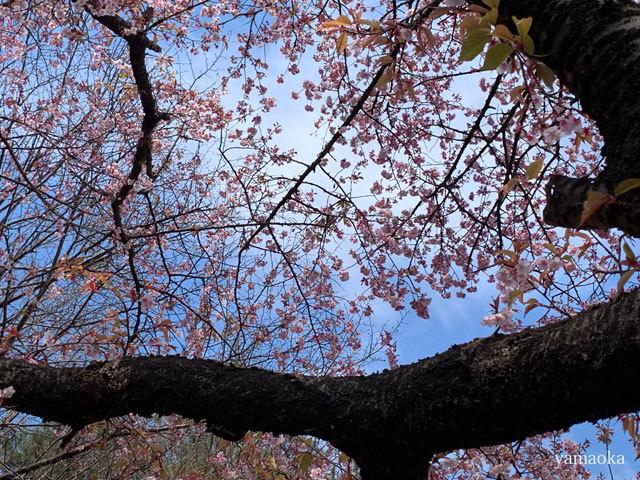 春一番が吹いた日。_f0071480_16350761.jpg