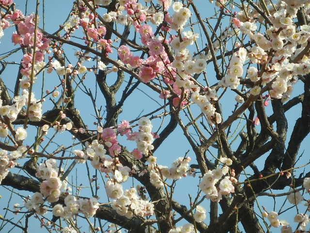 梅のかほりをもとめて。_e0378686_17581675.jpg