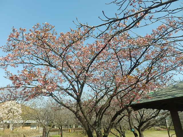 梅のかほりをもとめて。_e0378686_18023293.jpg