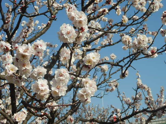 梅のかほりをもとめて。_e0378686_18031126.jpg