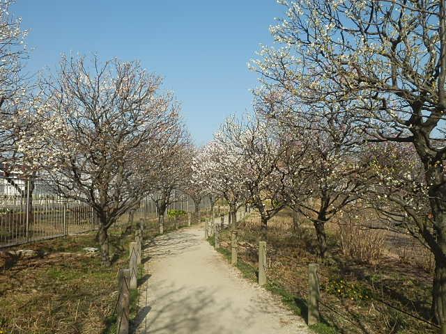 梅のかほりをもとめて。_e0378686_18032386.jpg