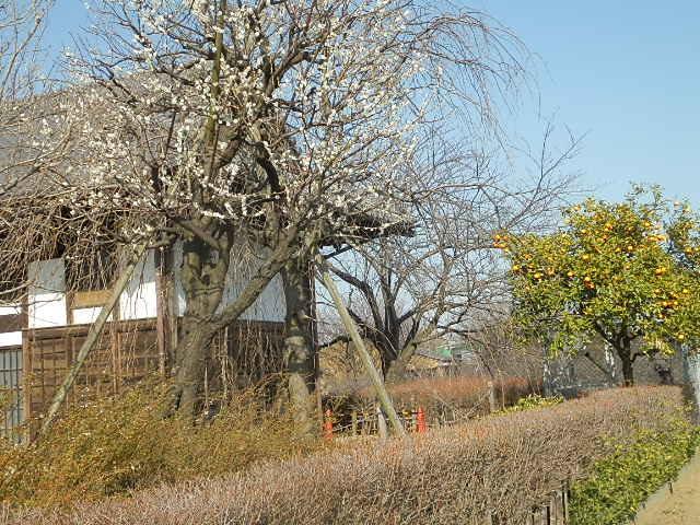 梅のかほりをもとめて。_e0378686_18045476.jpg