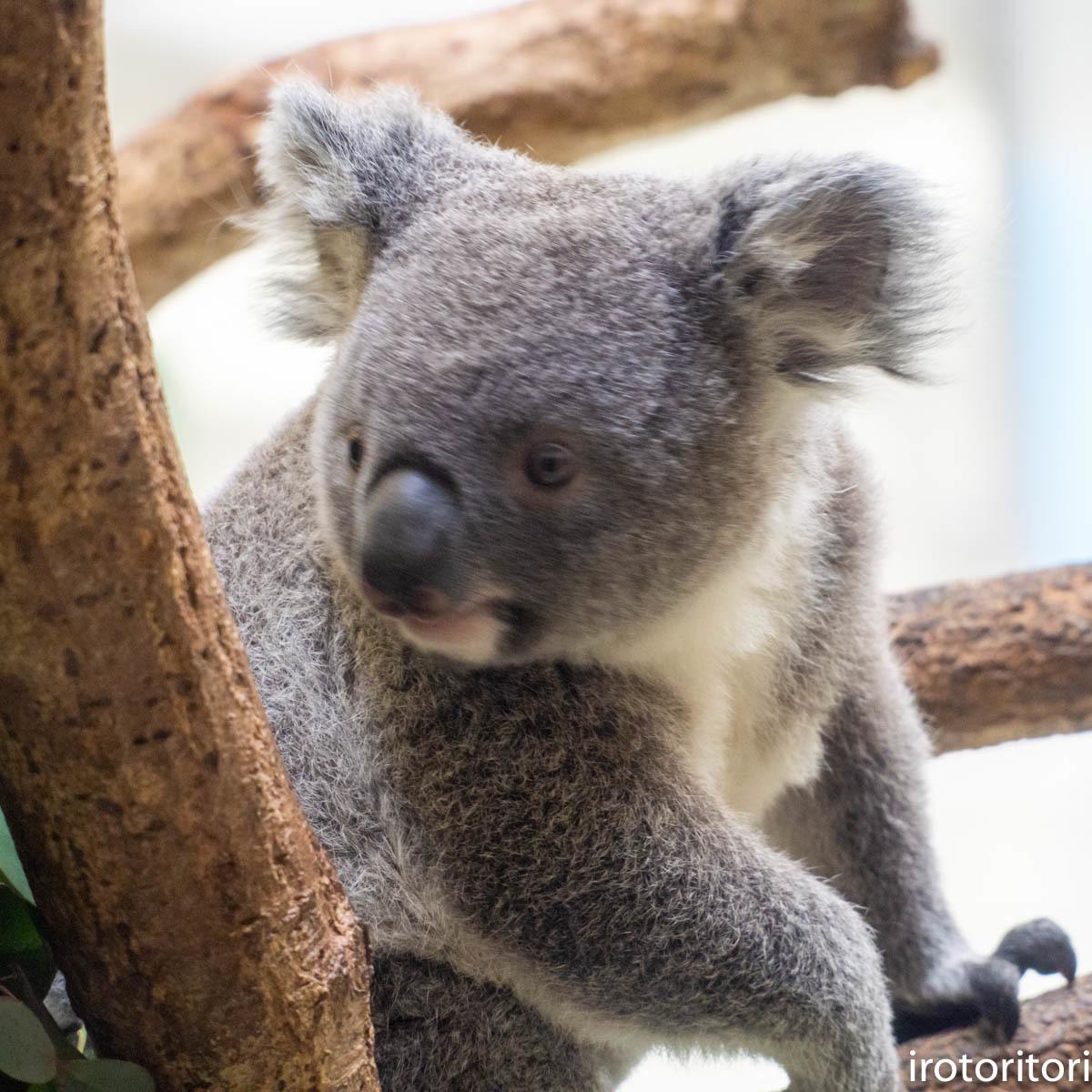 多摩動物園 (ナベコウ)  2020/02/20_d0146592_00002889.jpg