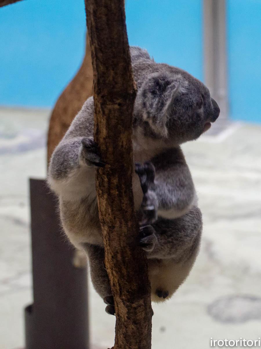 多摩動物園 (ナベコウ)  2020/02/20_d0146592_00005088.jpg
