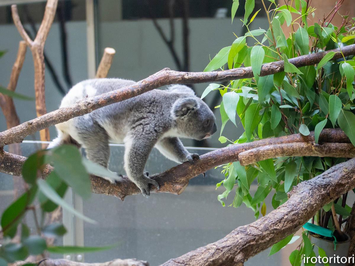 多摩動物園 (ナベコウ)  2020/02/20_d0146592_00011217.jpg
