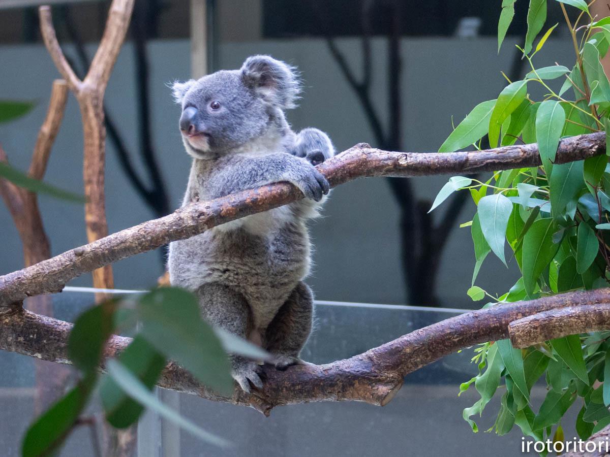 多摩動物園 (ナベコウ)  2020/02/20_d0146592_00015972.jpg
