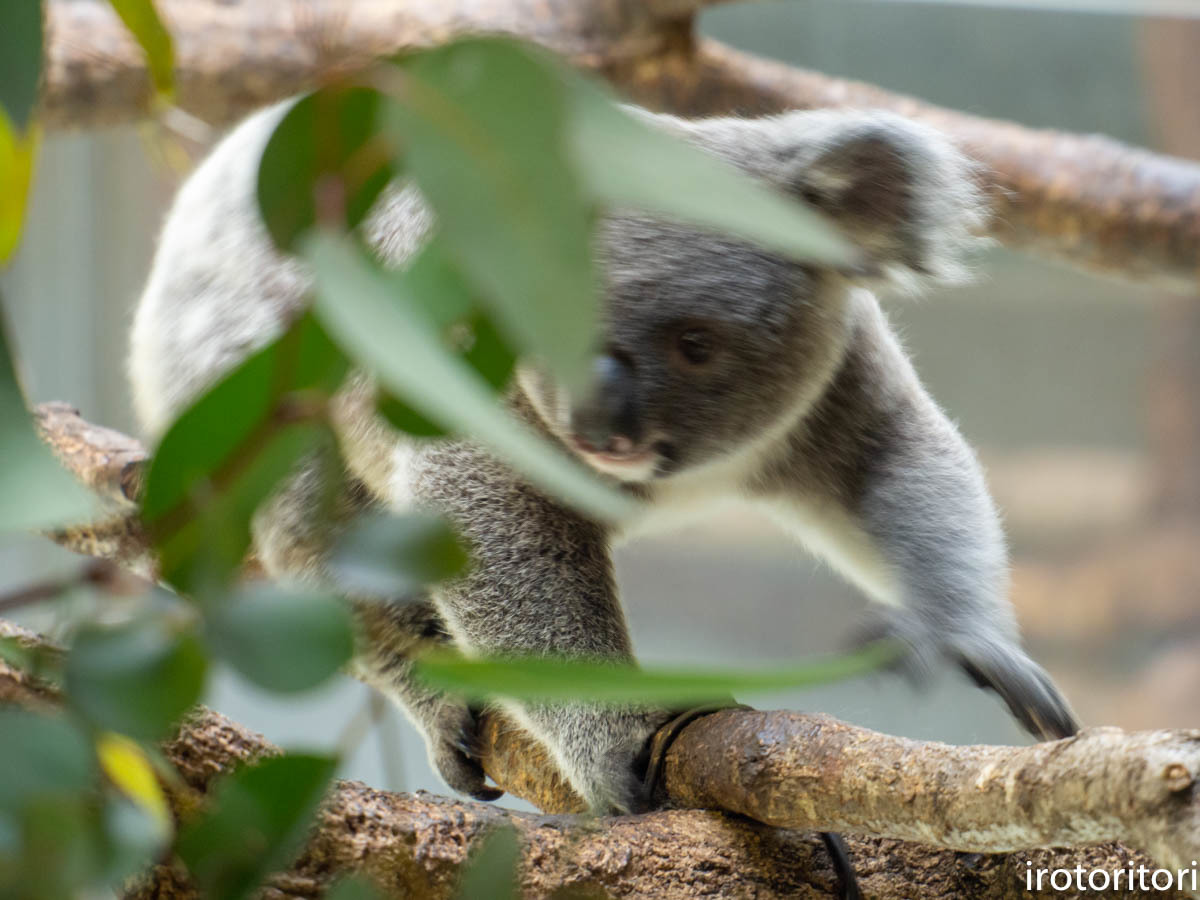 多摩動物園 (ナベコウ)  2020/02/20_d0146592_00021767.jpg