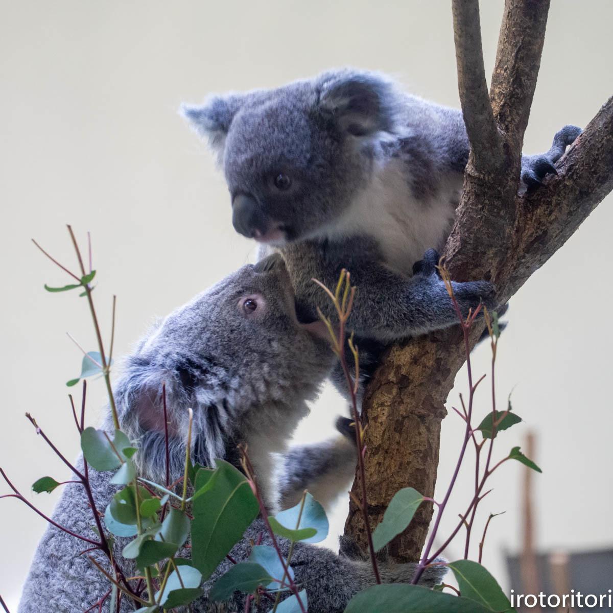 多摩動物園 (ナベコウ)  2020/02/20_d0146592_00030821.jpg