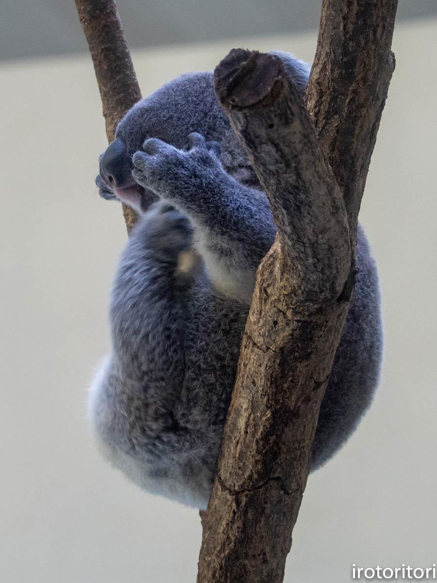 多摩動物園 (ナベコウ)  2020/02/20_d0146592_00031777.jpg