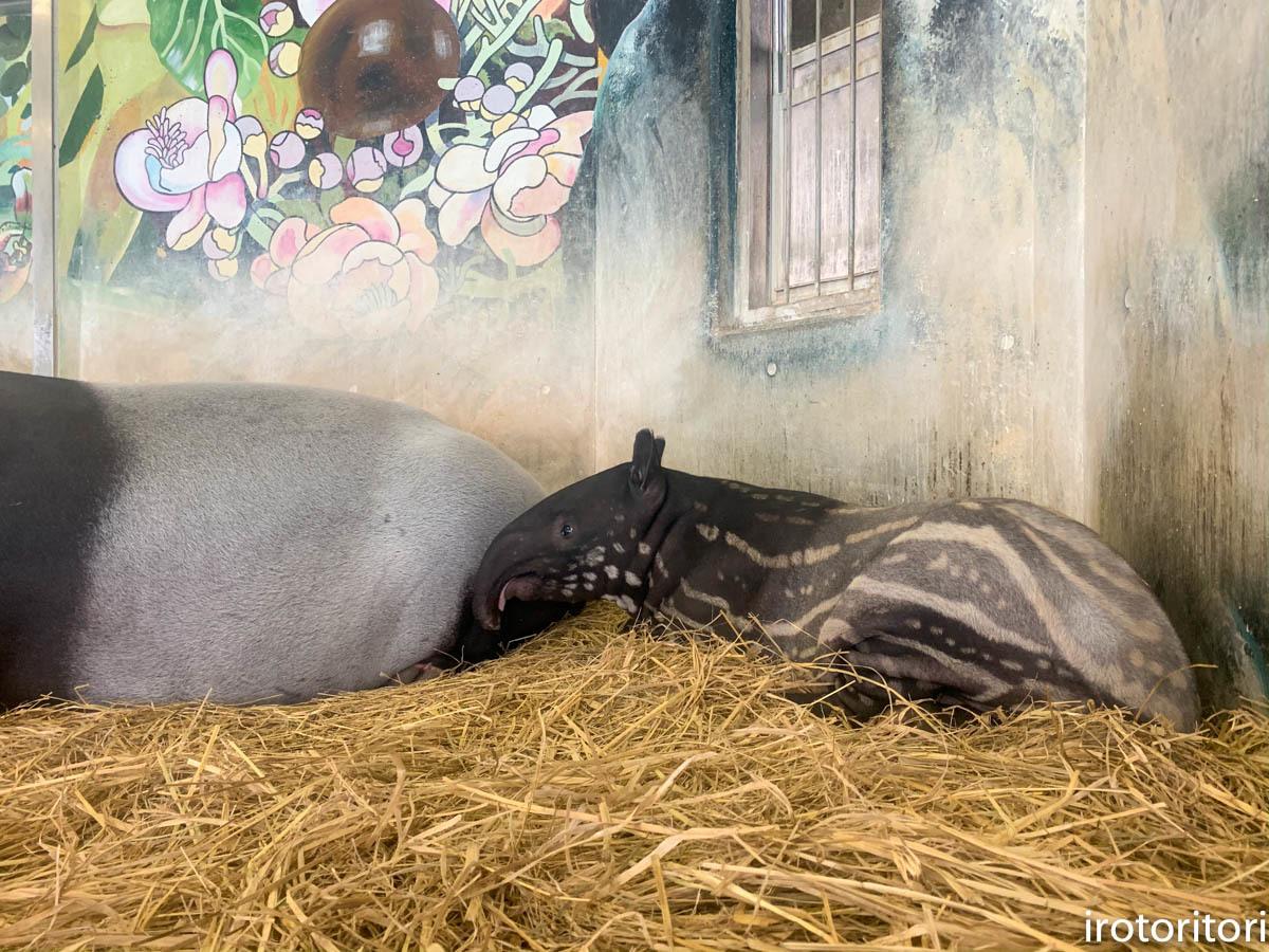 多摩動物園 (ナベコウ)  2020/02/20_d0146592_00050598.jpg
