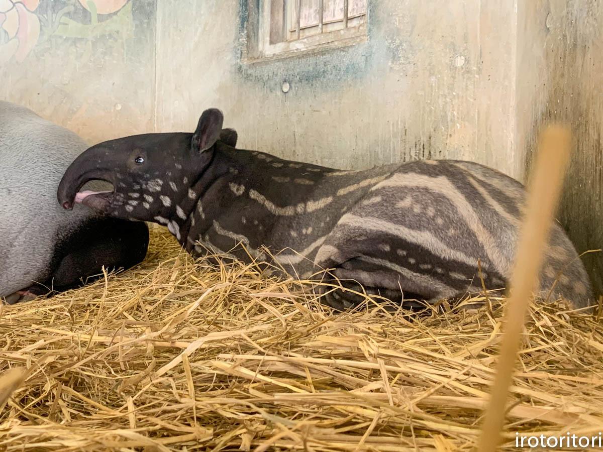 多摩動物園 (ナベコウ)  2020/02/20_d0146592_00054439.jpg