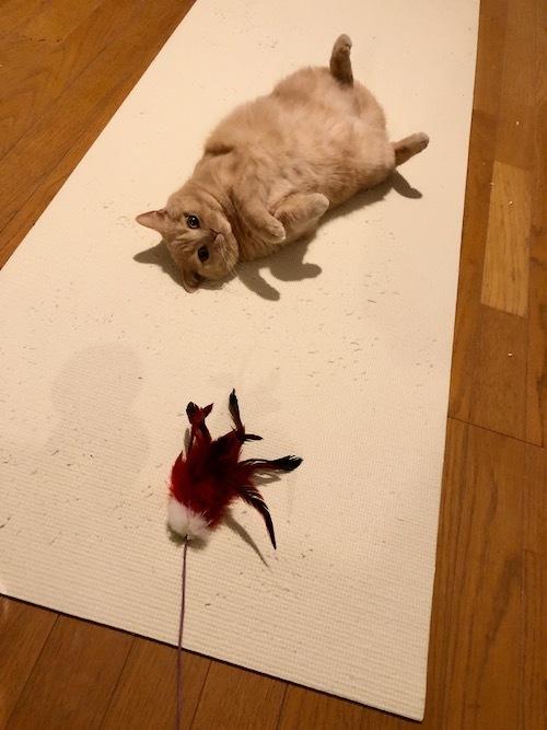今日は猫の日。_c0108595_23495794.jpeg